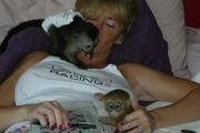 3 месяца обезьян-капуцинов